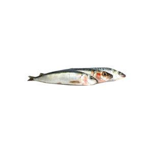 tb-sardinen