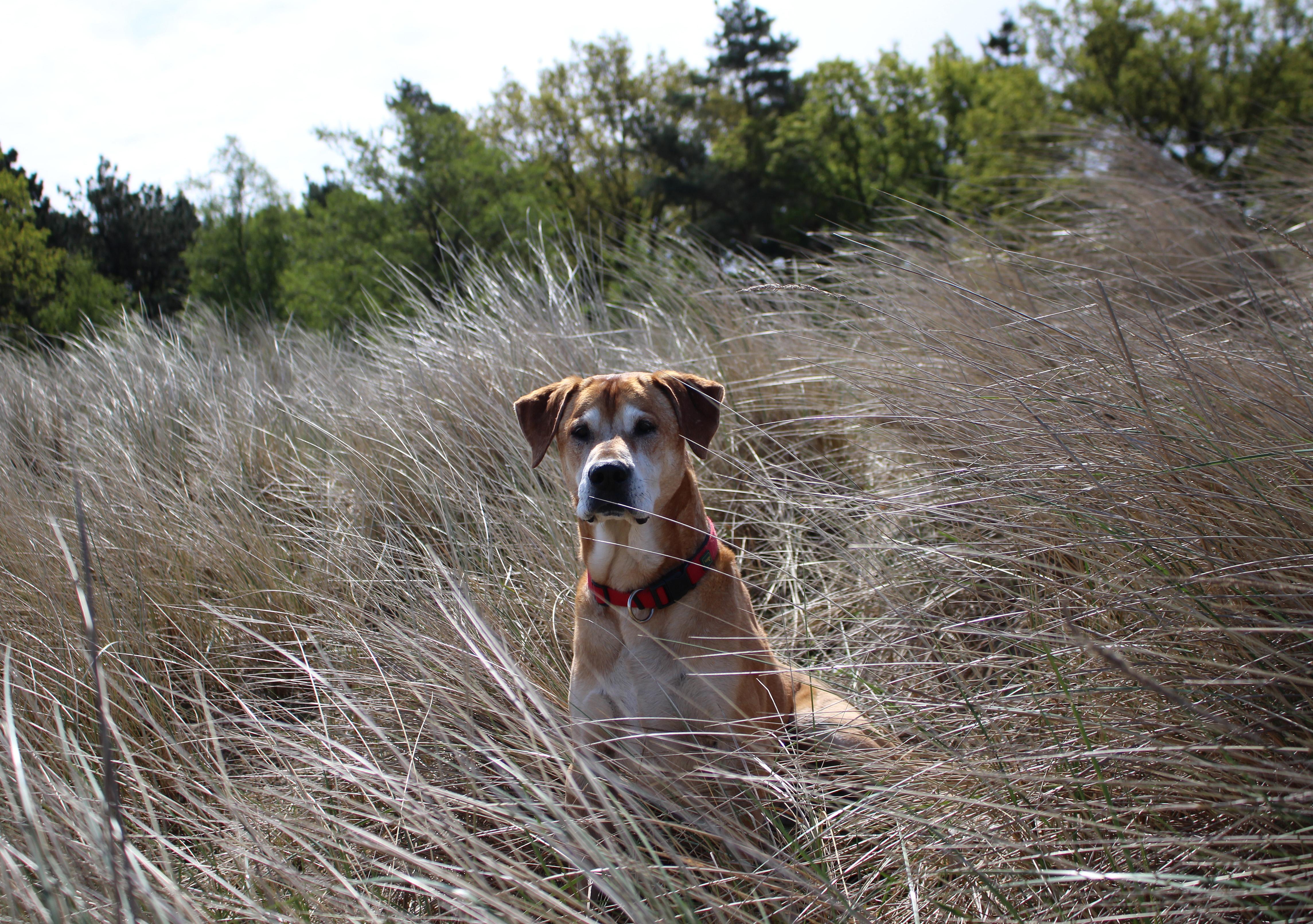 Mein Unvermittelbarer Hund Aus Dem Tierheim