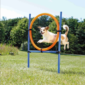 agility ring trixie